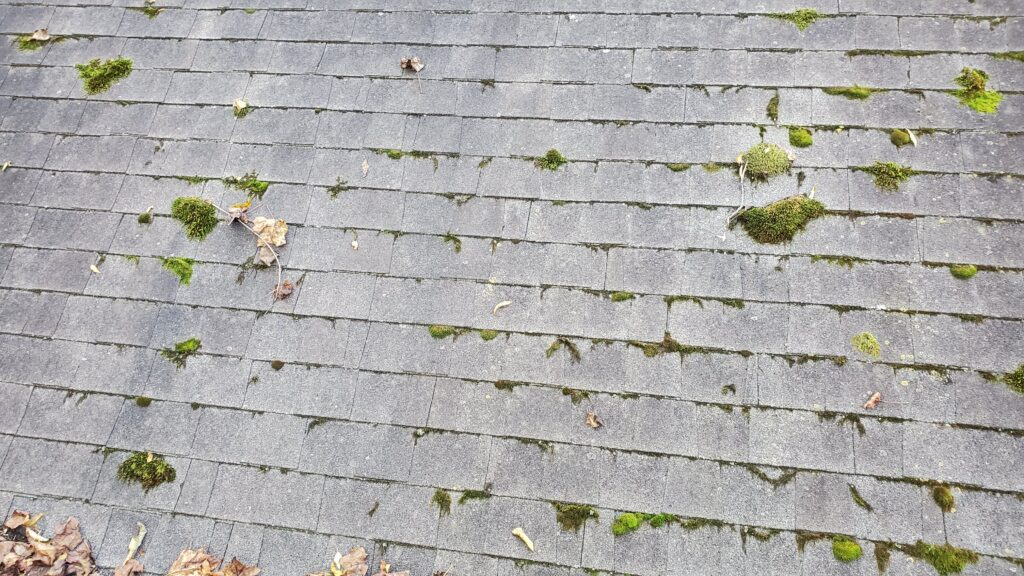 This is a picture of shingles covered in moss and algae and more moss and algae
