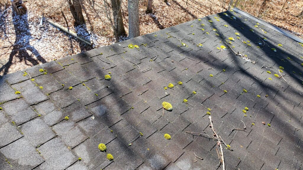 This is a picture of a grey shingle roof that is covered in moss.