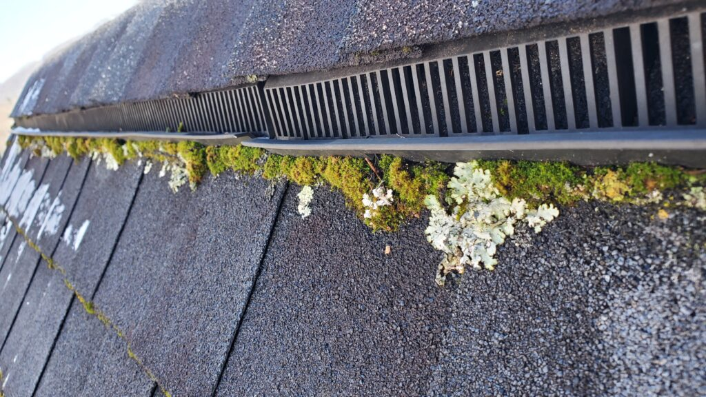 This is a picture of the ridge line of a roof with moss growing all along it.